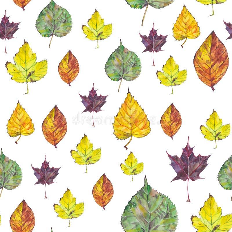 与秋叶的无缝的样式在白色背景 向量例证
