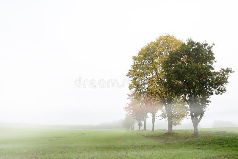 与秋叶的树行在反对一轻的gra的一个有雾的领域 免版税库存图片