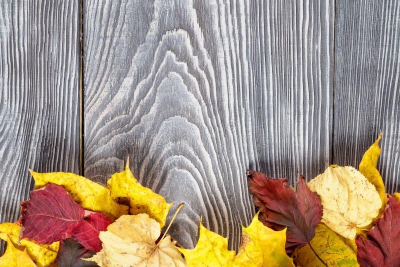 与秋叶的背景在委员会 图库摄影
