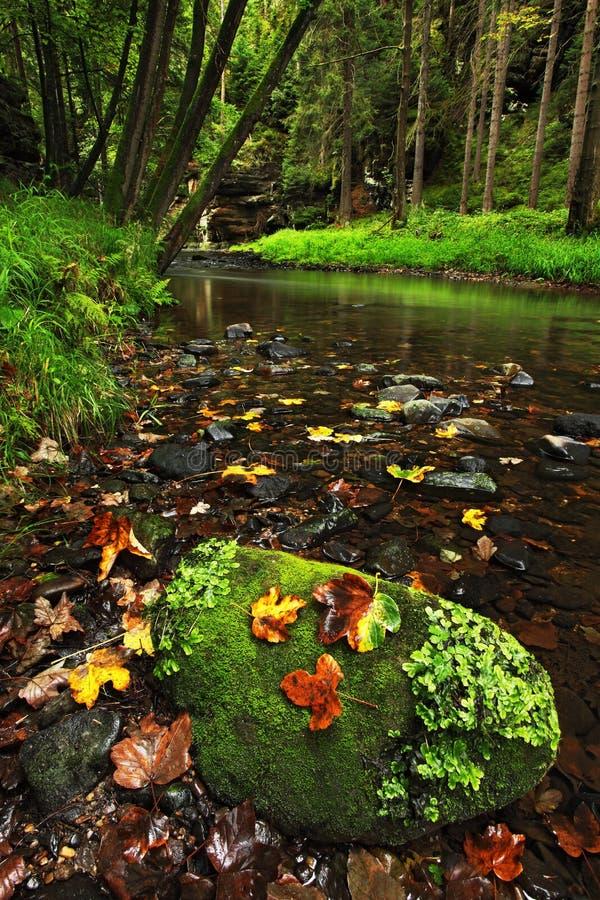与秋叶的落叶松属石头在与河和树,森林在背景中, Kamenice河的绿色风景,捷克nationa的 库存图片