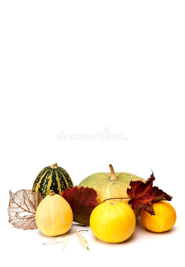与秋叶的装饰南瓜 免版税图库摄影