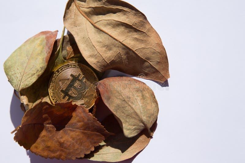 与秋叶的Bitcoin 免版税图库摄影