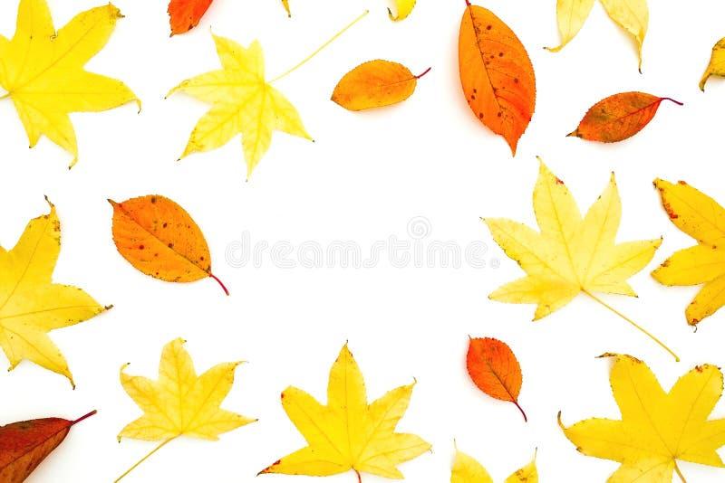 与秋天叶子的秋天框架在白色背景 平的位置,顶视图 秋季概念 库存图片
