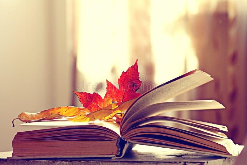 与秋天干燥叶子的书 免版税库存照片