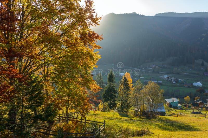 与秋天树的美好的五颜六色的早晨场面在喀尔巴阡山脉,乌克兰 免版税图库摄影