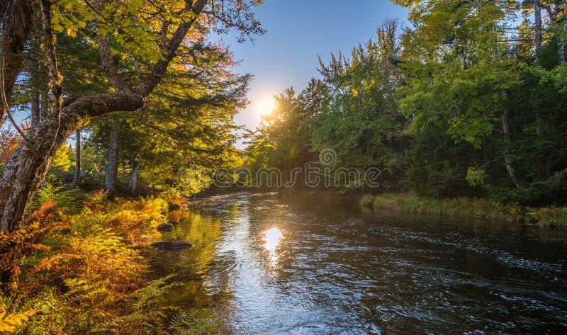 与秋天森林和河的风景 免版税库存图片
