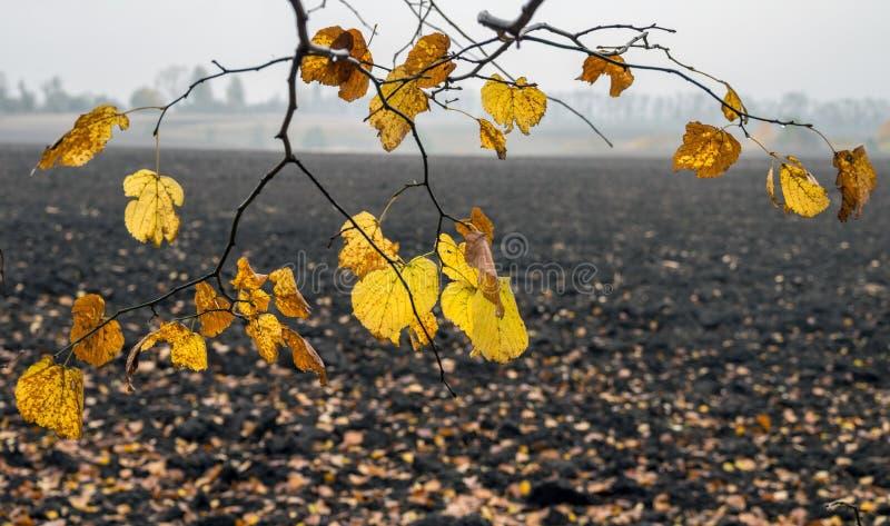 与秋天的分支染黄了叶子以一个被弄脏的被犁的领域为背景 库存图片
