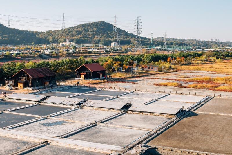 与秋天芦苇领域的盐场在Sorae生态沼泽地公园在仁川,韩国 库存照片