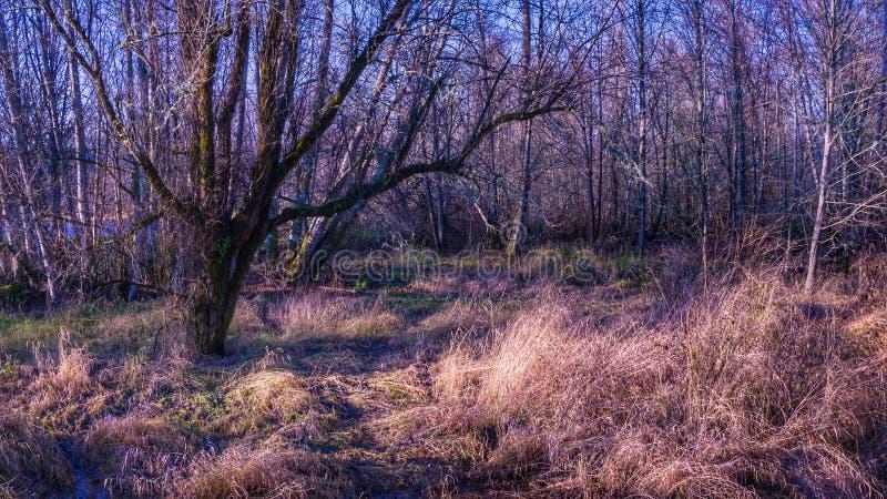 与秋天颜色和棕色草的一个风景 库存图片