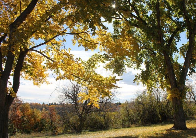 与秋天颜色的树 库存图片