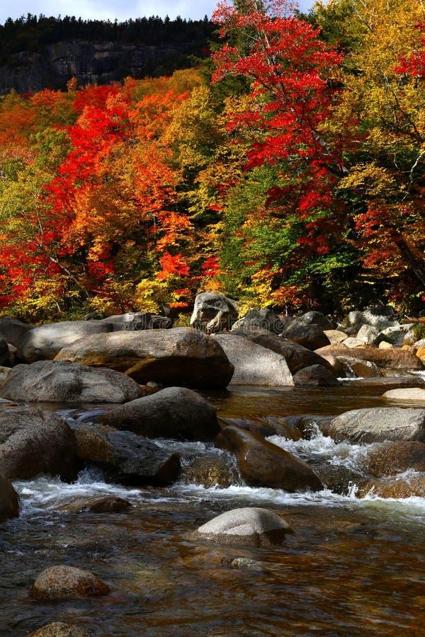 与秋天颜色的狂放的小河 库存图片