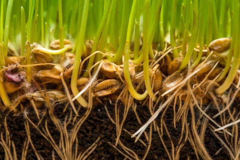 与种子的土壤 免版税库存图片