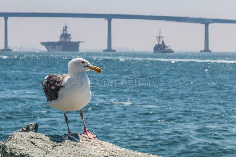 与科罗纳多桥梁和军舰的海鸥在圣地亚哥 免版税图库摄影