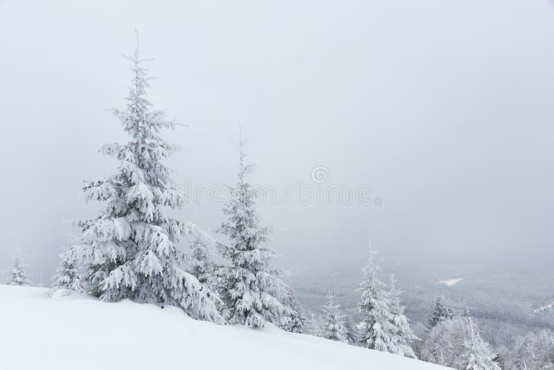 与积雪的冷杉木的冬天风景 库存图片