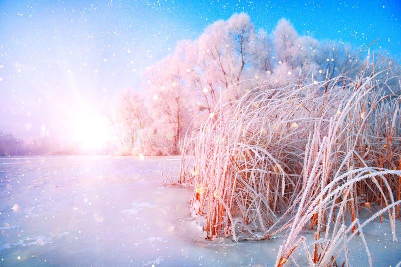 与积雪的树和被冰的河的美好的冬天风景场面背景 免版税库存图片