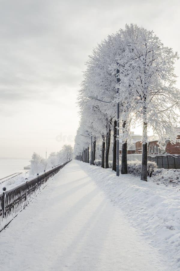 与积雪的树的冬天都市风景 库存照片
