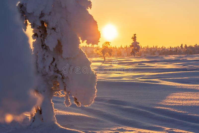 与积雪的树的美好的冬天风景在拉普兰 免版税库存照片