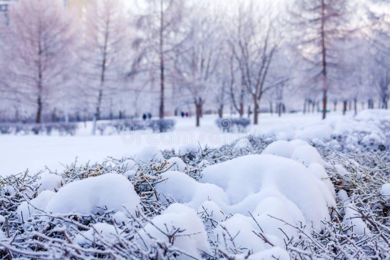 与积雪的灌木的冬天背景 免版税库存图片