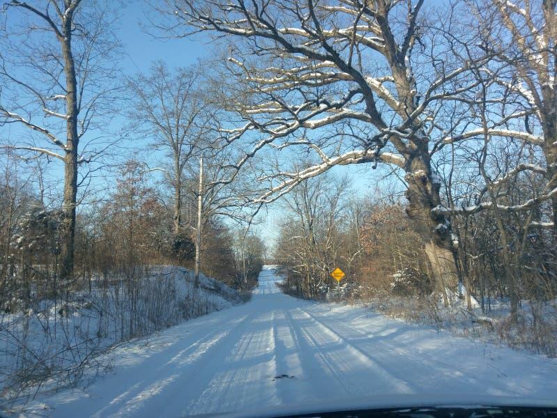 与积雪的结构树的冬天横向 免版税库存图片