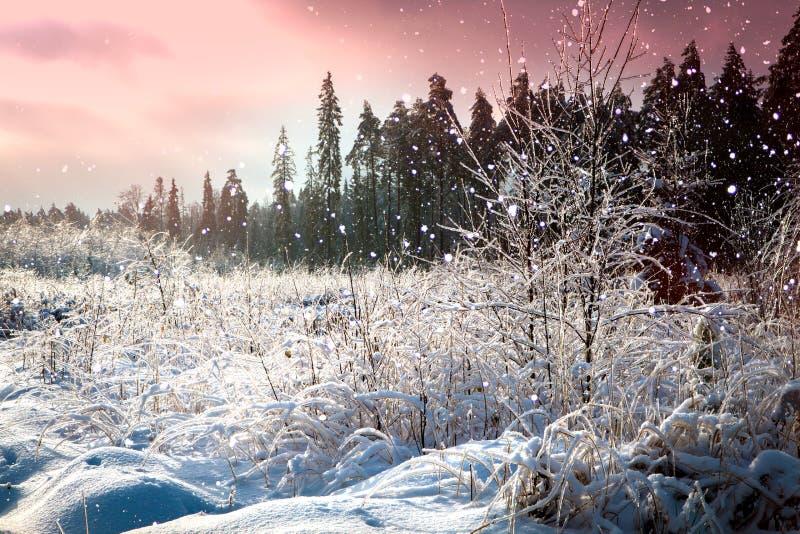 与积雪的路的美好的冬天风景在冷淡的天 库存图片