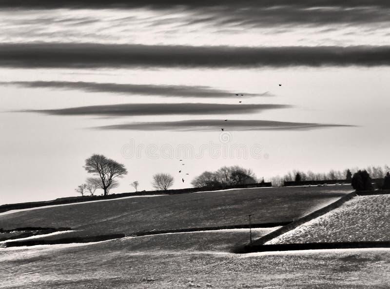 与积雪的领域的风格化纯然的单色荒凉的冬天风景与黑飞行在光秃的树的石墙和乌鸦 库存照片