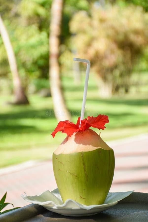 与秸杆和红色花的绿色新鲜的椰子服务象在室外酒吧的鸡尾酒饮料在手段 库存照片