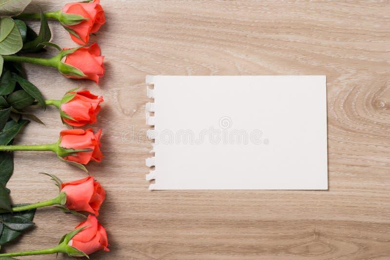 与空插件的橙色玫瑰 免版税库存图片
