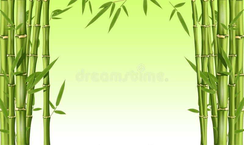 与空格-与叶子的绿色竹词根的竹框架 库存例证