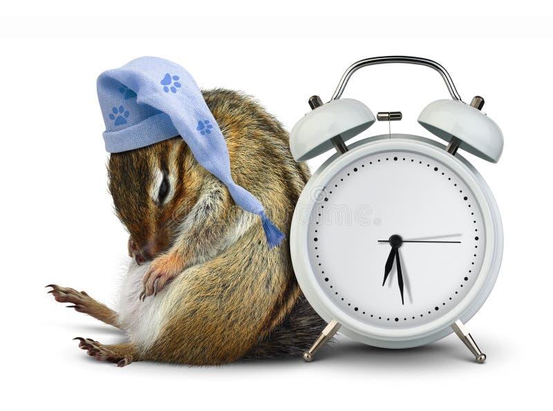与空白的时钟和睡觉帽子的滑稽的动物花栗鼠睡眠 免版税库存照片