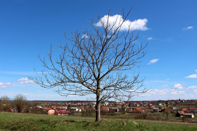 与空的分支的偏僻的老树没有在小小山俯视的房子顶部的叶子和多云天空蔚蓝在背景中 免版税库存图片
