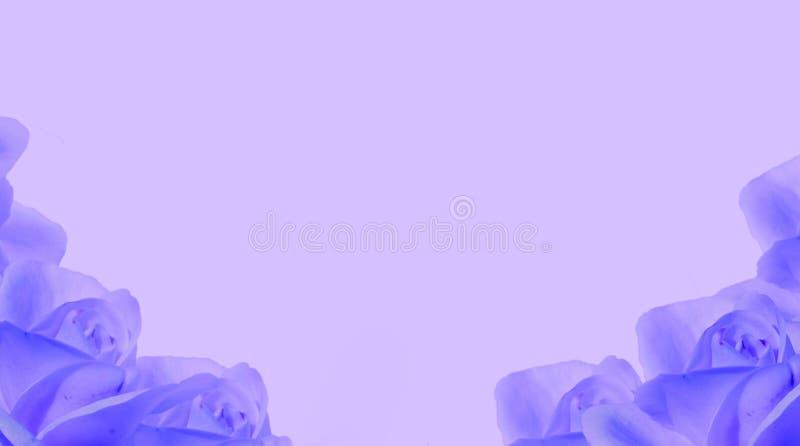 与空的赠送阅本空间的蓝色玫瑰花夏天背景文本的 库存照片
