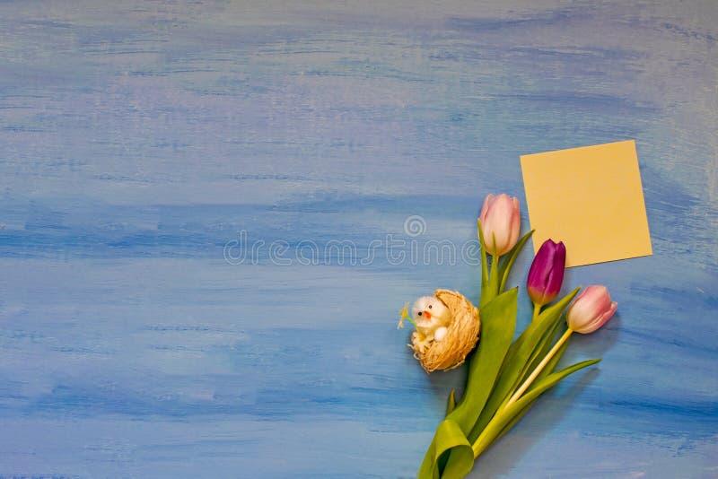 与空间的桃红色和紫罗兰色郁金香在蓝色背景的题字的 r 免版税库存照片