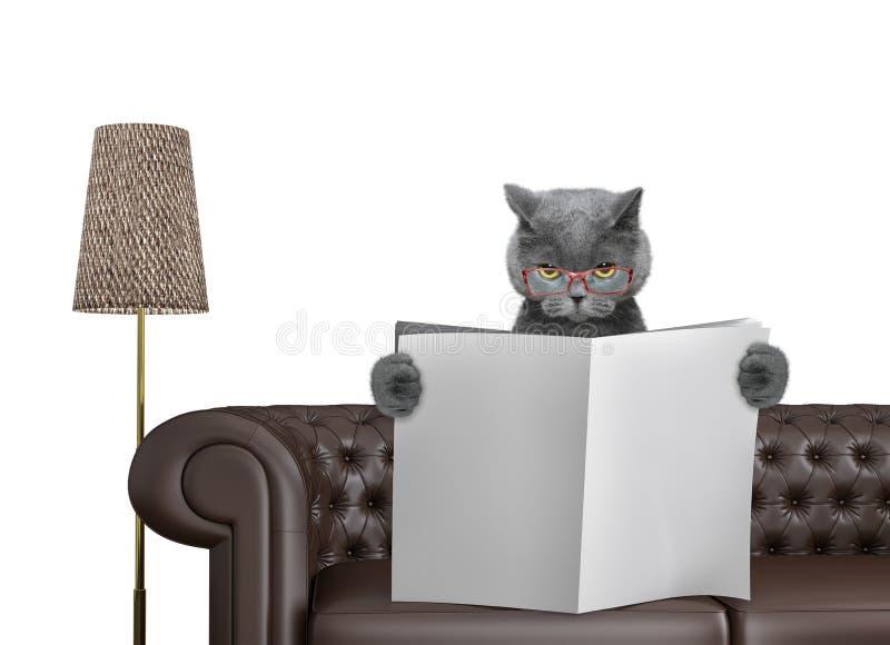 与空间的逗人喜爱的猫读书报纸在沙发的文本的在客厅 查出在白色 免版税库存图片