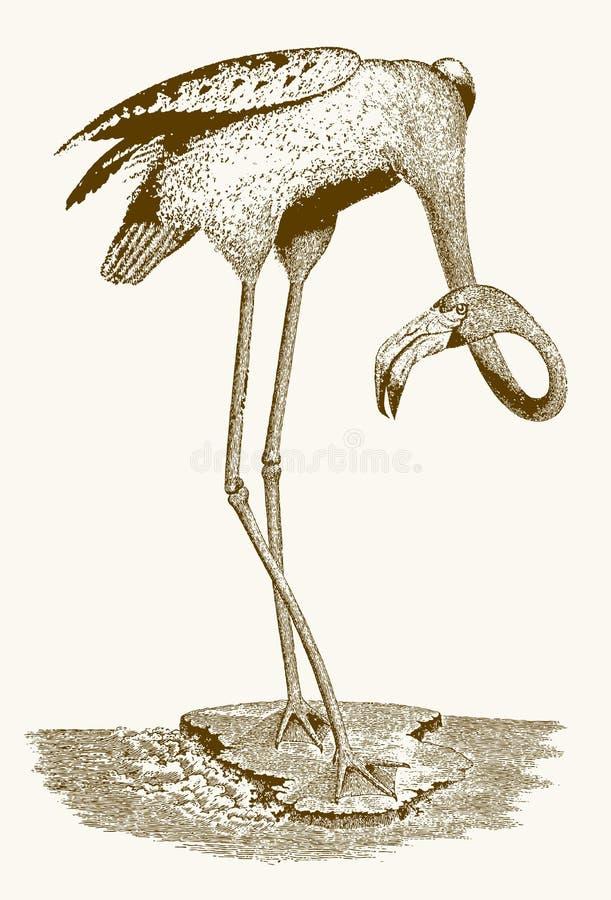 与站立在一个小的小岛的一个弯曲的脖子的火鸟 库存例证