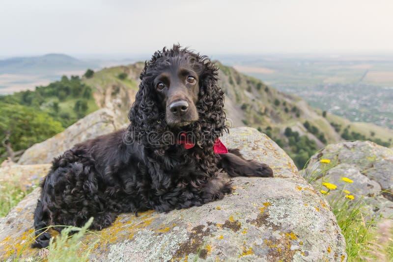 与站立在一个美好的风景上的岩石的一块红色班丹纳花绸的美丽的黑猎犬 图库摄影