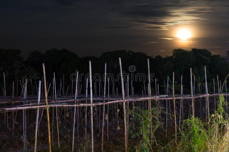 与竹子的月光,老庄稼 图库摄影