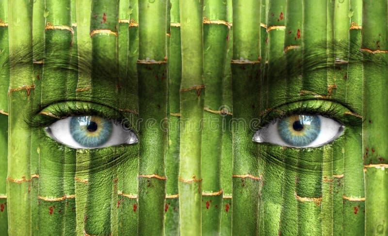 与竹样式的人面 库存照片