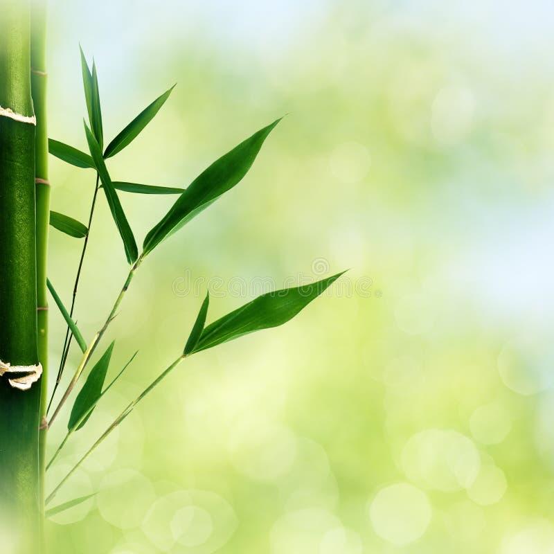 与竹草的东方抽象背景 库存图片