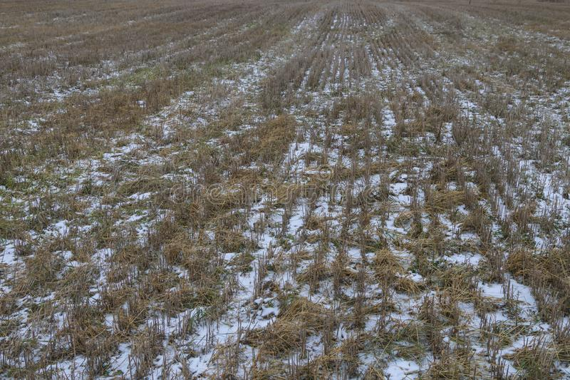 与第一雪的空的秋天领域在收获以后 免版税库存图片