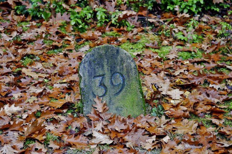 与第39的地标在一个领域在秋天 库存照片