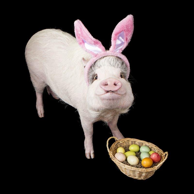与篮子的滑稽的猪复活节兔子 免版税库存图片