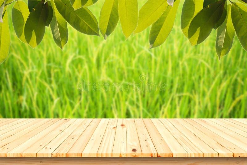 与米的绿色耳朵的木桌在水稻领域的在被弄脏的背景 库存图片