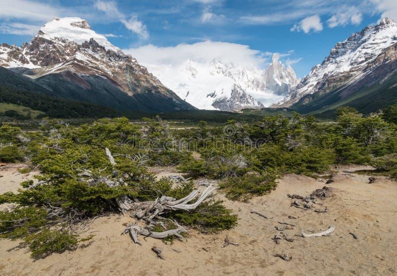 与粗糙的山毛榉树的谷在南部的巴塔哥尼亚 免版税库存照片