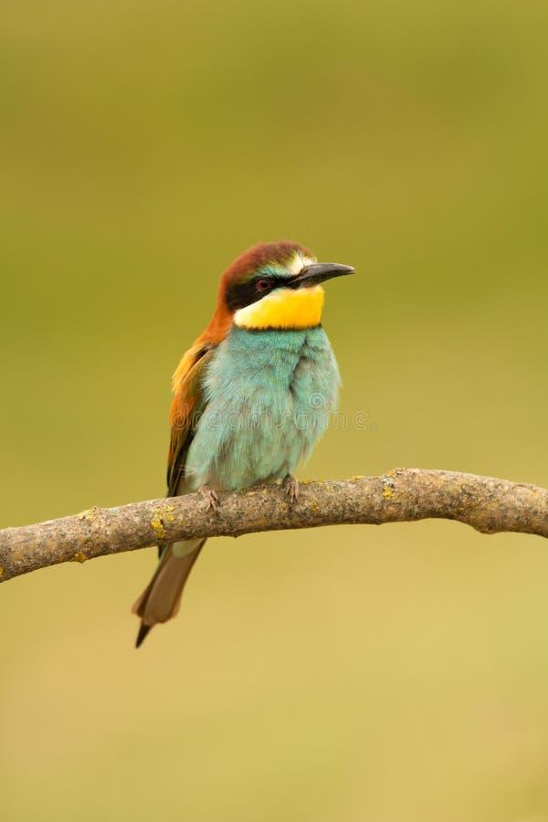 Download 与精密全身羽毛的小鸟 库存图片. 图片 包括有 自由, 发光, 颜色, 照亮, 尾标, 动物区系, 滑翔机 - 72360571