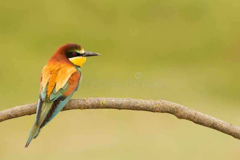 Download 与精密全身羽毛的小鸟 库存照片. 图片 包括有 欧洲, beautifuler, 寻呼机, 绿色, 双翼飞机 - 72361712