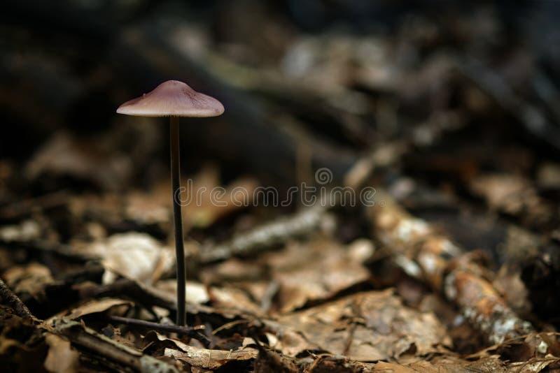 与紫罗兰色杯子的小蘑菇在秋天森林里,关闭 图库摄影