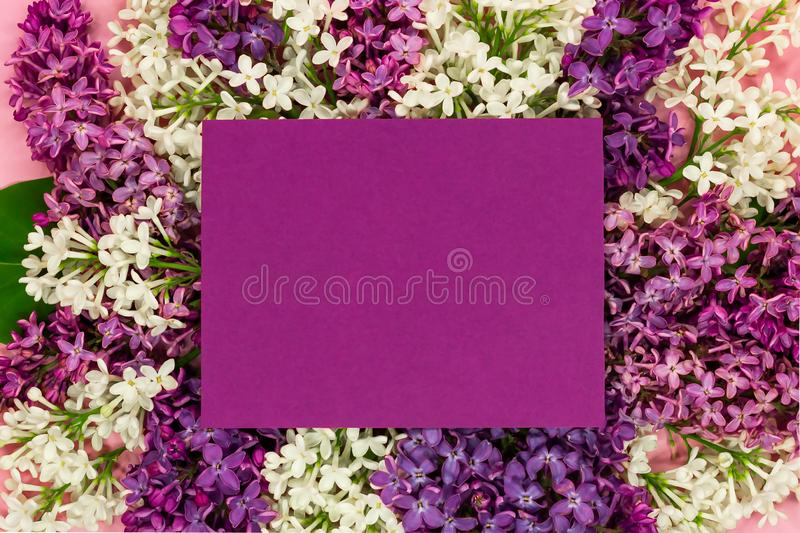 与紫罗兰色空白的淡紫色花文本的束和地方 紫丁香属植物边界 库存图片
