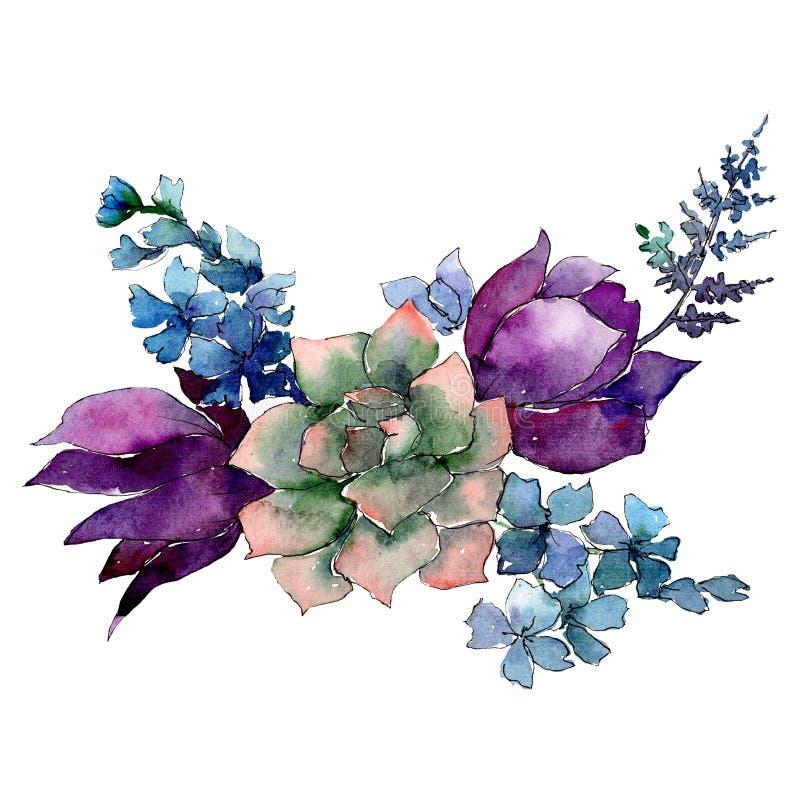 与紫色和蓝色花的多汁植物 被隔绝的花束例证元素 水彩背景例证集合 皇族释放例证