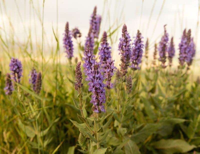 与紫色花的美好的风景本质上 库存照片