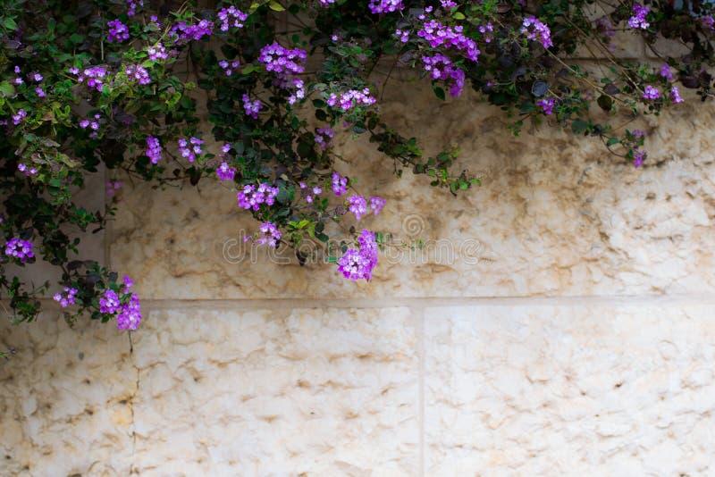 与紫色花的葡萄酒背景发火焰 免版税图库摄影